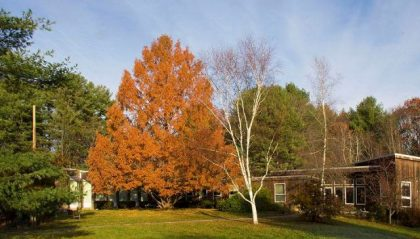 The Dawn Redwood  tree in front of the Allen Ave Unitarian Universalist Church in Portland Maine